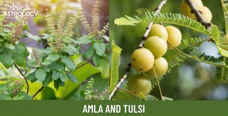 Religious and Ayurvedic importance of Amla and Tulsi