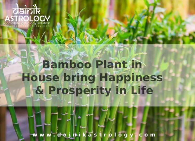 How Bamboo Plant in House bring Happiness & Prosperity in Life?