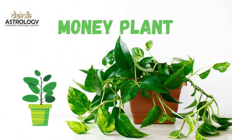 What You Should Keep In Mind While Planting A Money Plant In House?